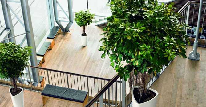 Plants can reduce noise in offices