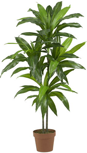 Potted indoor plant